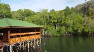 ke crop samping beberapa tumbuhan bakau di Piaynemo